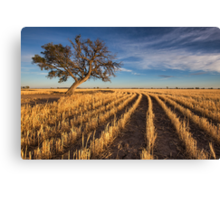 Gold Trail Canvas Print