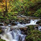 Ravennaschlucht - Cascades and Waterfalls by Bernd F. Laeschke