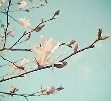 Paper Petals by Cassia