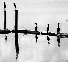Bird Reflections by Heidi Stewart