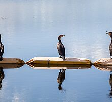 Three's a Crowd - Cormorants by Heidi Stewart