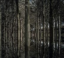 Woodland - 2 by maxblack