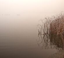 Pond on a foggy morning by MichaelBachman