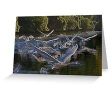 Swan Stampede Greeting Card