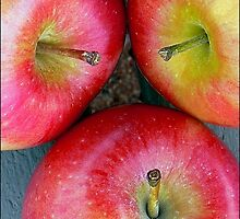 Apple,Apple,Apple Stems by paintingsheep