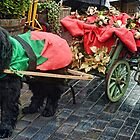 Ruby Is Ready To Do Her Christmas Shopping by lynn carter