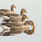 Greylag Geese by M.S. Photography/Art
