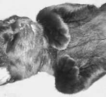 Adorable Sleeping Kitten B&W by Brenda Hopkins