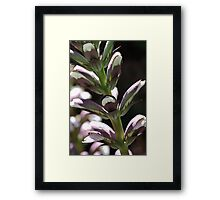 flower-oyster-plant-bloom Framed Print