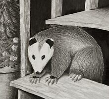 Opossum on Deck Step by jkartlife