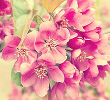 Retro Spring Blossoms by afeimages