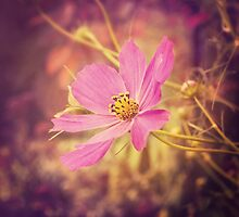 Pink Cosmos II by afeimages