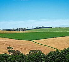 Harvest Time by Tony Buckley