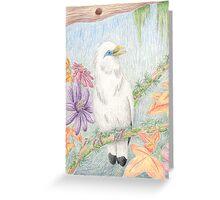 Bali Myna Greeting Card