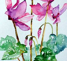 Cyclamen by Maire Morrissey-Cummins