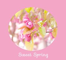 Sweet Spring by afeimages