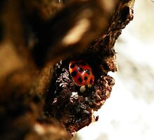miss lady bug by Tabitha Taylor