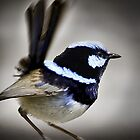 Superb Blue Fairy Wren by Ruth Valasini