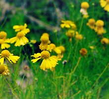 Yellow Wildflowers by Scott Mitchell
