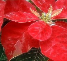 Mottled Red Poinsettia 1 Ephemeral by Christopher Johnson