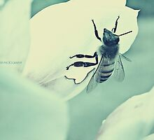 PANTONE - BEE #443 by Laura E  Shafer