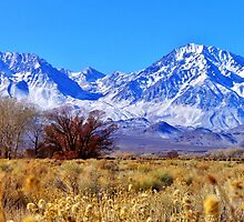 A High Sierra Monday by marilyn diaz
