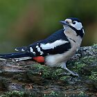 Great spotted woodpecker - III by Peter Wiggerman
