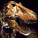 T REX by Raoul Madden