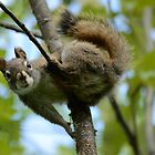 Squirrel In Greenery 2 by themanitou