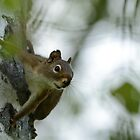 Spider Squirrel by themanitou
