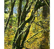 Mossy Trees in Autumn by Tim McGuire