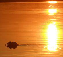 Pelican Sunset by ronburt