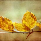 Textured Autumn Leaves Photographic Art by Natalie Kinnear