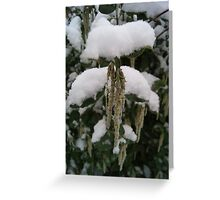 Droop in White Snow  Greeting Card
