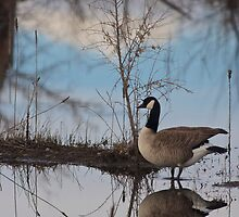 Goose Reflection by Henry Huettel