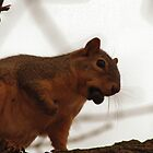 Red Squirrel Guy by Keala