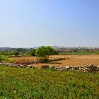 Fields In Zurrieq by sgrixti