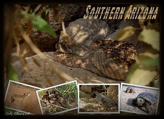 Southern AZ Critters by Kimberly Chadwick