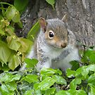 Baby Squirrel 3 by shiro