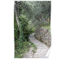 Olive Tree Grove Poster