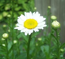 White flower in garden by Siemccleery