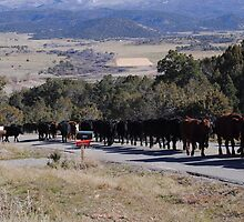 November Cattle Drive  by Joanne Dowd