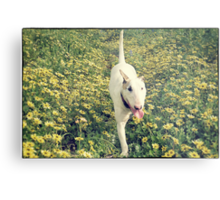 Bully and Flowers Metal Print