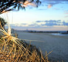 Beach grass sunset by Paula  Miastkowski