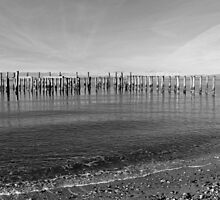 Pilings at Roberts Bank by Lesliebc