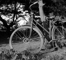 old bicycle  by noegrr