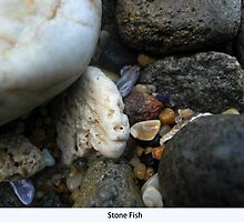 Stone Fish by FIONA M. HENSHAW