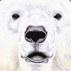 Polar Bear Portrait by rachels1689