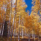 Golden Aspens of the San Juan Skyway by Alex Cassels