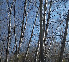 Dramatic trees by Zohaib Ali